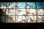 Okna z huty Guardian